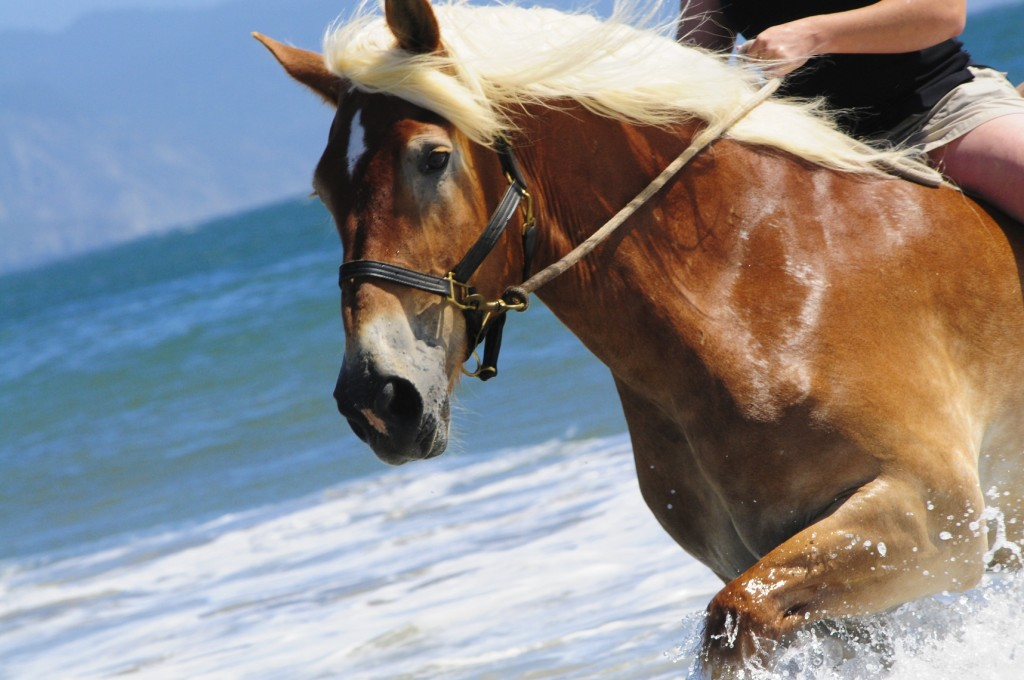 Horse galloping on a beach